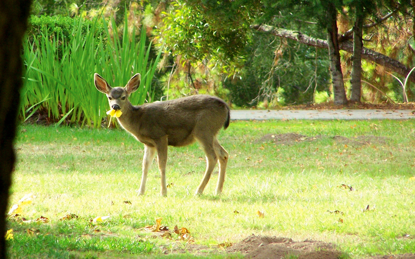 Wildlife visitors on campus